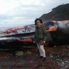 Una enorme ballena aparece varada en una playa del concejo de Caravia