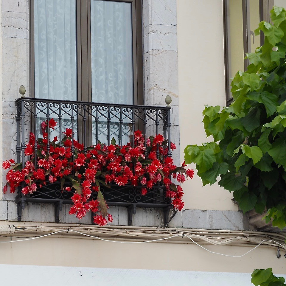 La Cultural convoca el XXIV Concurso de Floricultura de Ribadesella