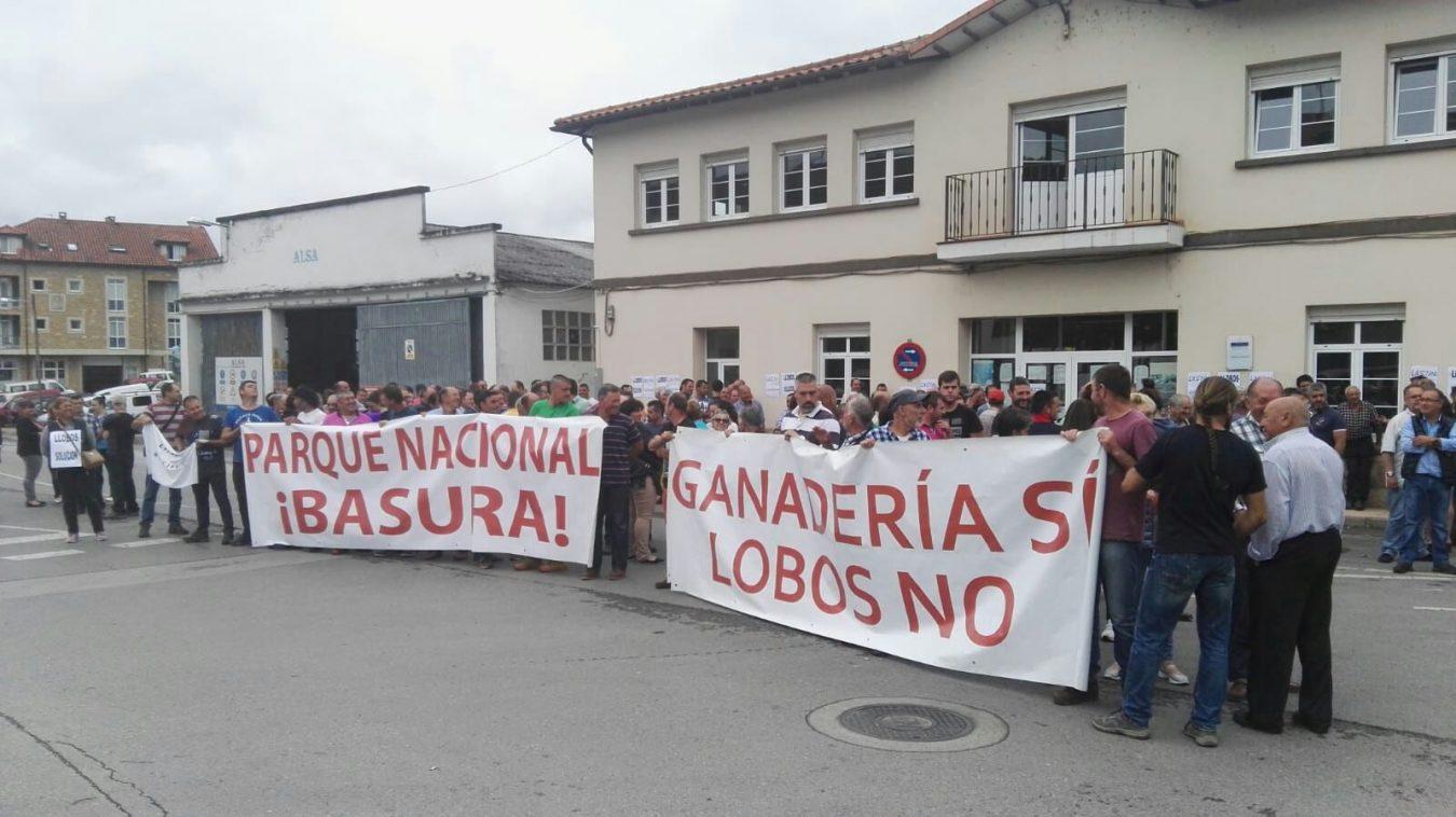 Los ganaderos de Picos, hartos del lobo, piden batidas serias contra la  especie | Cope Ribadesella