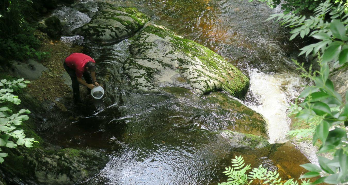 El Esmerillón suelta 25.000 alevines de trucha en el río Cares