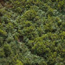 Rescatado un grupo de siete excursionistas belgas en Peñamellera Alta