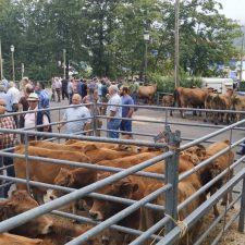 Benia de Onís celebra su tradicional feria de ganado de San Mateo