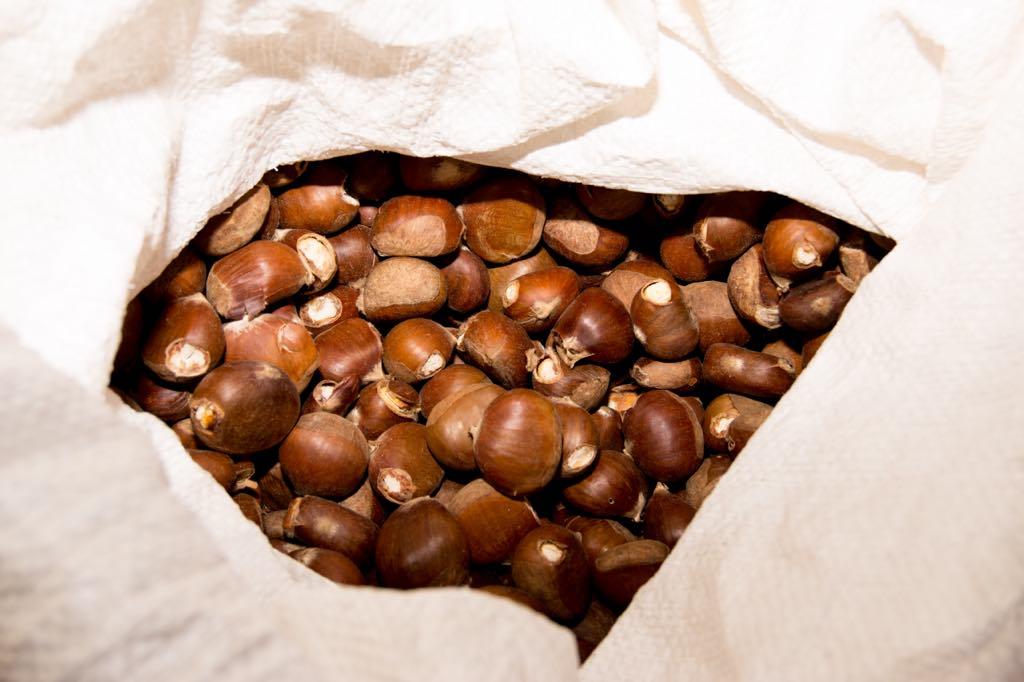 Amagüestu con castañas y degustación de setas en San Esteban de Leces (Ribadesella)