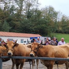Benia de Onís acoge la Feria de Otoño con poco ganado y pocos compradores