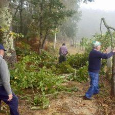 Sextaferia vecinal en Coya (Piloña) para limpiar y desbrozar un camino