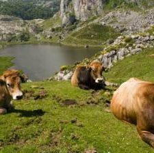 El Plan Rector del Parque Nacional de los Picos de Europa saldrá a información pública antes de fin de año
