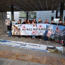 Los ecologistas se concentran en Oviedo contra los controles poblacionales de lobos en el Parque Nacional de los Picos