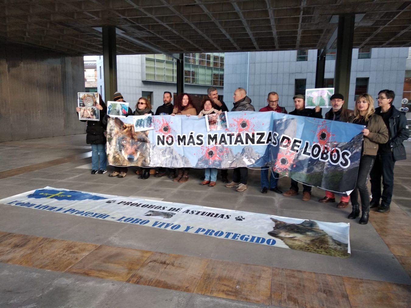 Ecologistas en Acción denuncia la persecución del lobo en los Picos de Europa y pide su defensa