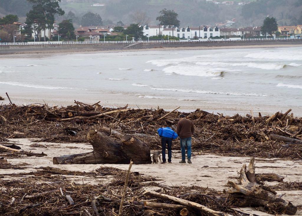La riada deja árboles de hasta 30m en la playa de Ribadesella