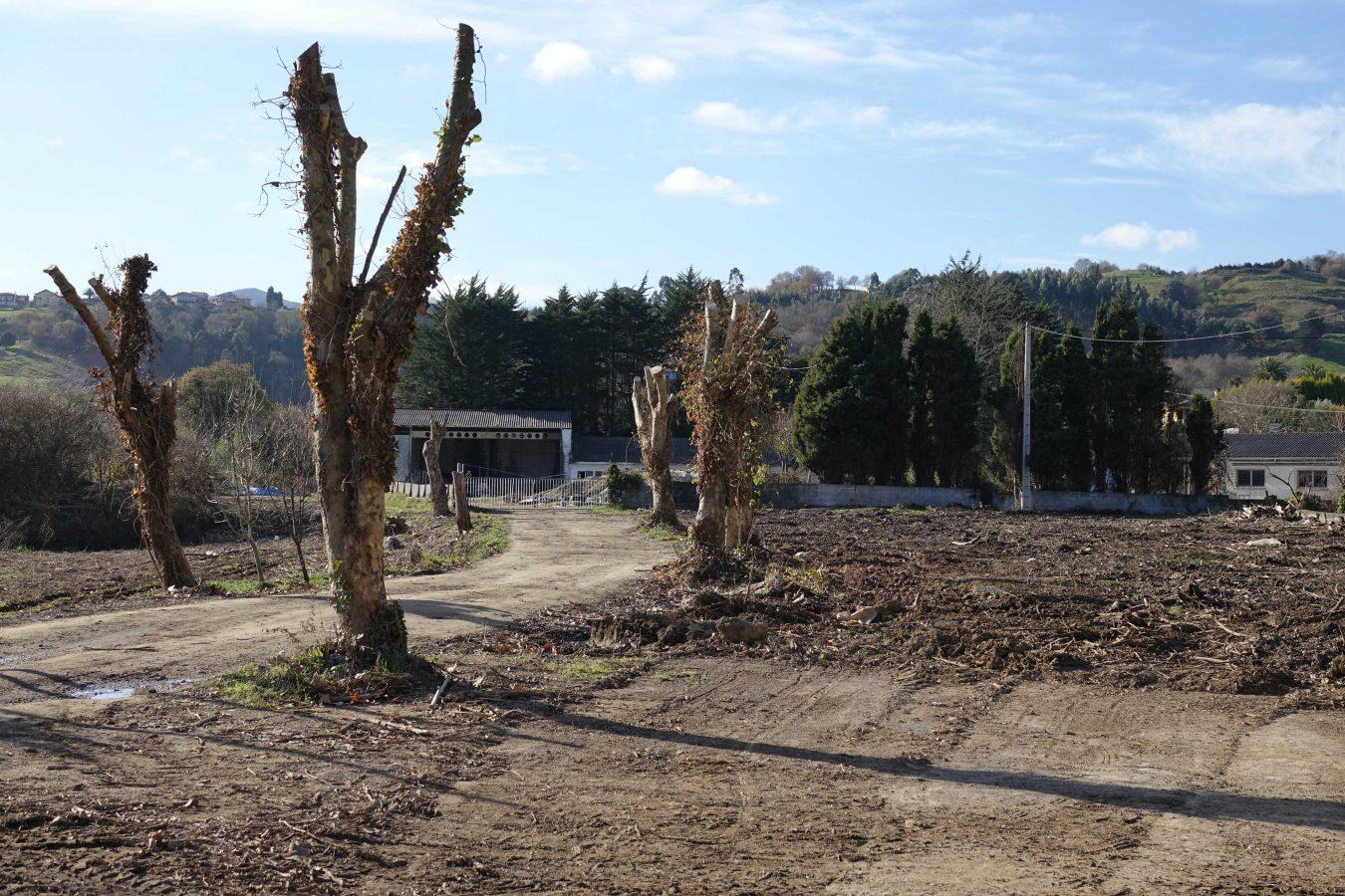 Los ecologistas paralizan los huertos urbanos que Ribadesella quiere crear en La Mediana