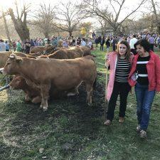 La Consejera de Desarrollo Rural visitó hoy la Feria de Corao para evitar la protesta de mañana