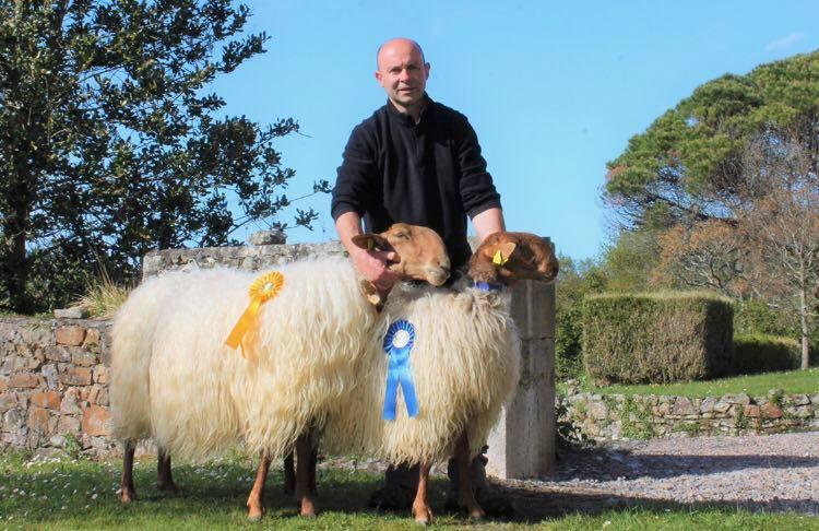 Un riosellano triunfa con su rebaño de ovejas Carranzanas en el concurso de Pola de Laviana