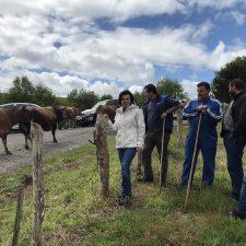 Comienza la temporada de pastos para los pastores del Monte Cayón (Piloña)