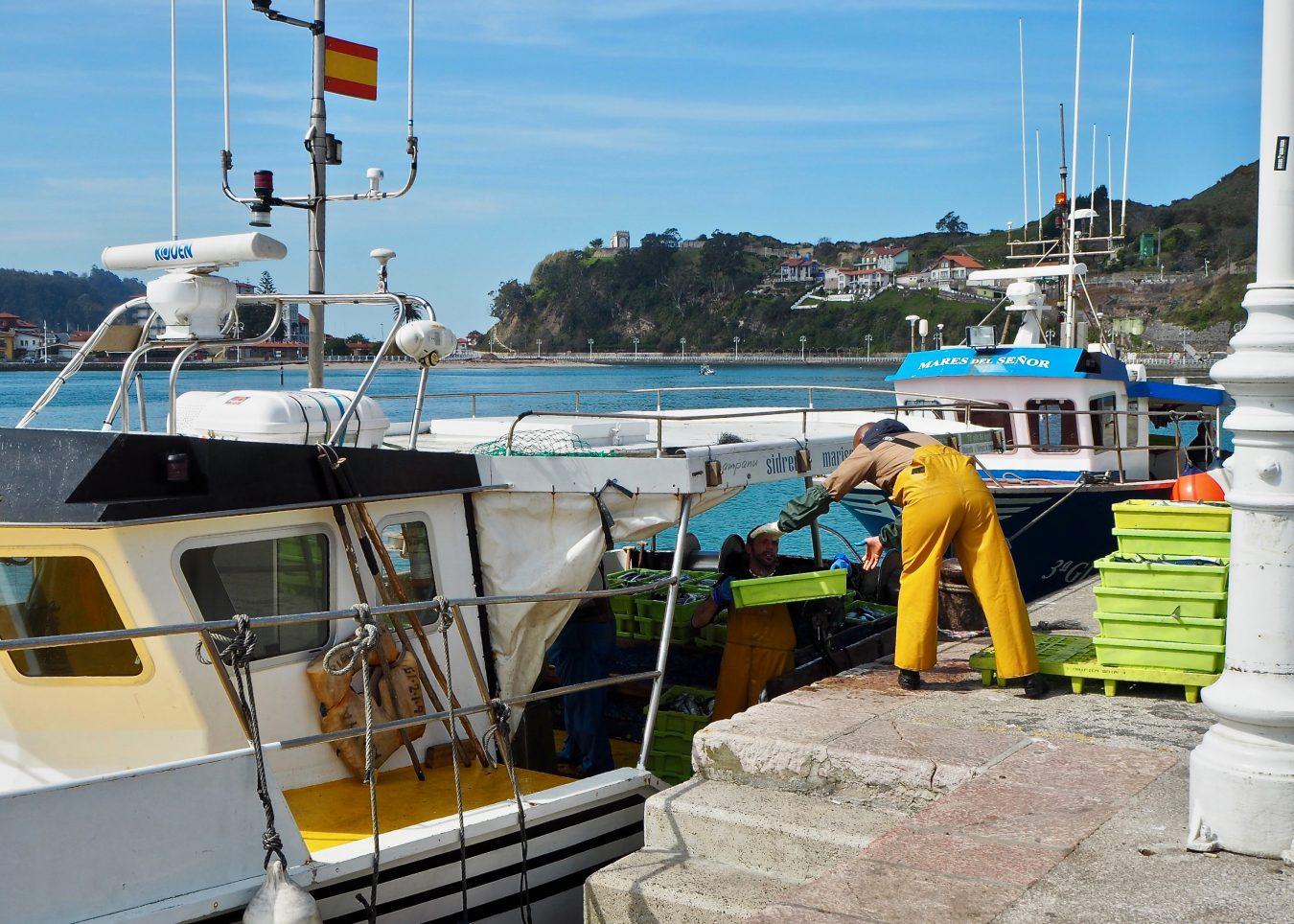 La costera de la xarda superara ya los resultados de la angula en los puertos de la comarca