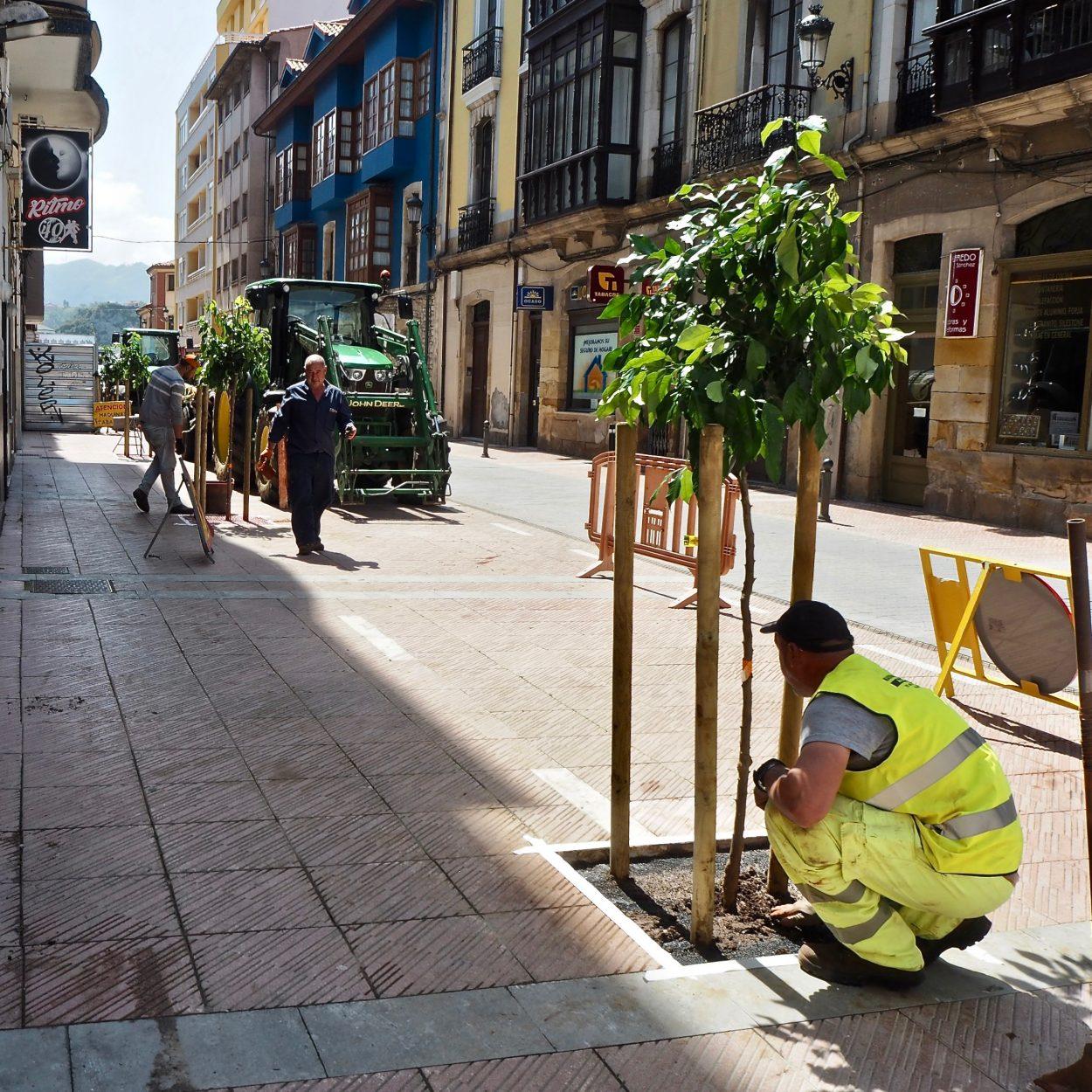 Diez naranjos rejuvenecen la imagen de la calle Comercio de Ribadesella