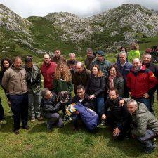 El próximo verano serán 23 los quebrantahuesos que volarán en libertad en los Picos de Europa
