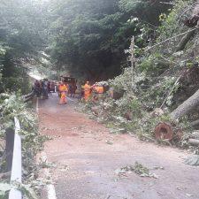 Los operarios abren un carril en la carretera AS-264 (Cabrales), cortada por la caída de un árbol
