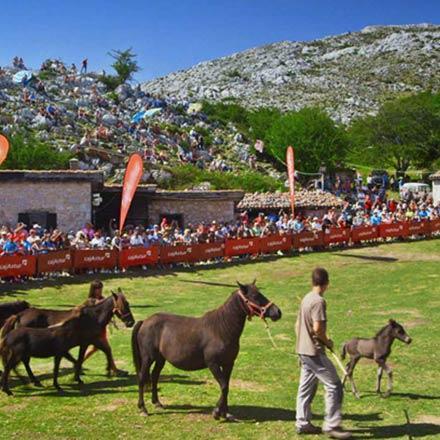 La Fiesta del Asturcón ya es de Interés Turístico Nacional