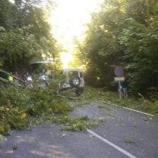 La caída de un árbol corta la carretera de Los Lagos (CO-4) durante unos minutos