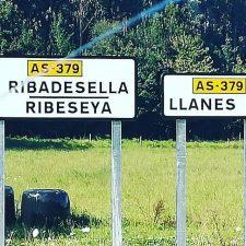 Un coche atropella un toro en Ribadesella y provoca la estampida de un rebaño de vacas