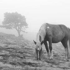 La avilesa Cristina Rodríguez gana el XXI Concurso de Fotografía del Sueve. Anselmo Montoto se lleva el premio local