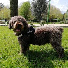 Muere Marley, el perro que ayudó a esclarecer el asesinato del concejal llanisco Javier Ardines
