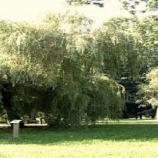 El Arboretum de Panes se rejuvenece con 30.000 euros de inversión