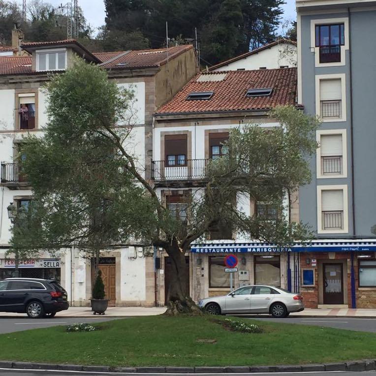 El fuerte viento parte en dos el olivo del muelle de Ribadesella