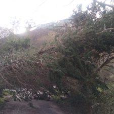 La caída de un árbol corta una carretera local en el concejo de Ribadesella a la altura de Sotu