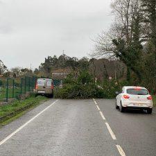 La caída de un árbol corta la carretera AS-379 Ribadesella-Llanes a la altura de Toriellu