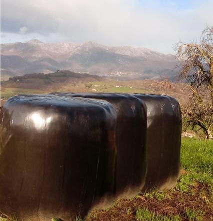 Llanes duplicará el servicio de recogida de plásticos de uso ganadero tras retirar 20 Tn en la campaña de este año