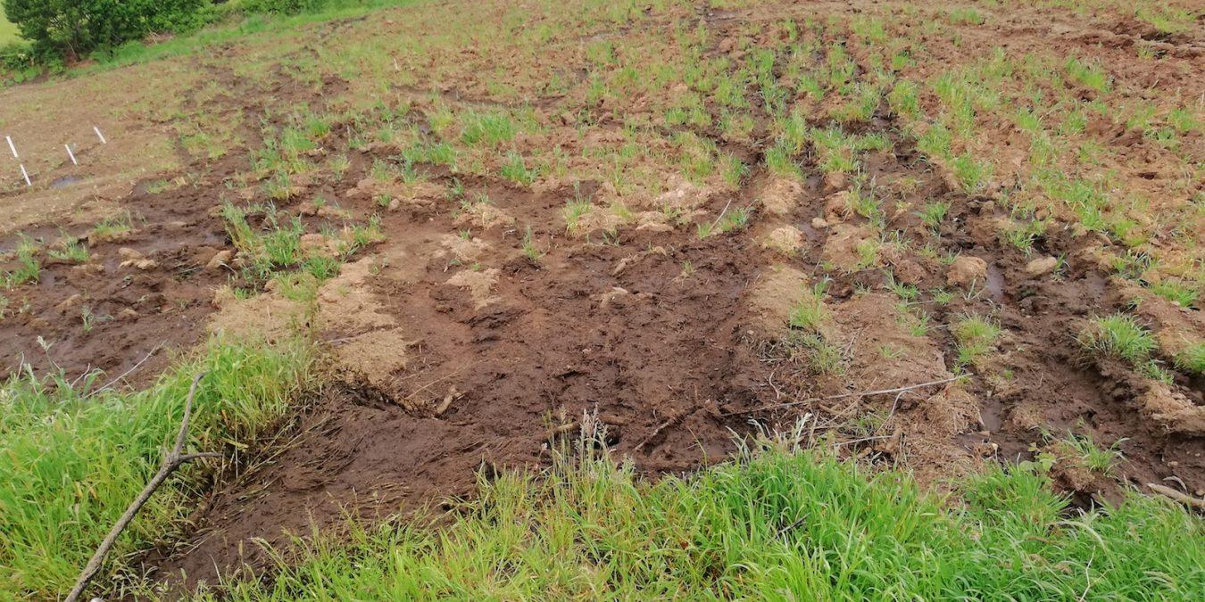 Los ecologistas piden la mejora y ampliación de la planta de residuos ganaderos de Ortiguero (Cabrales)