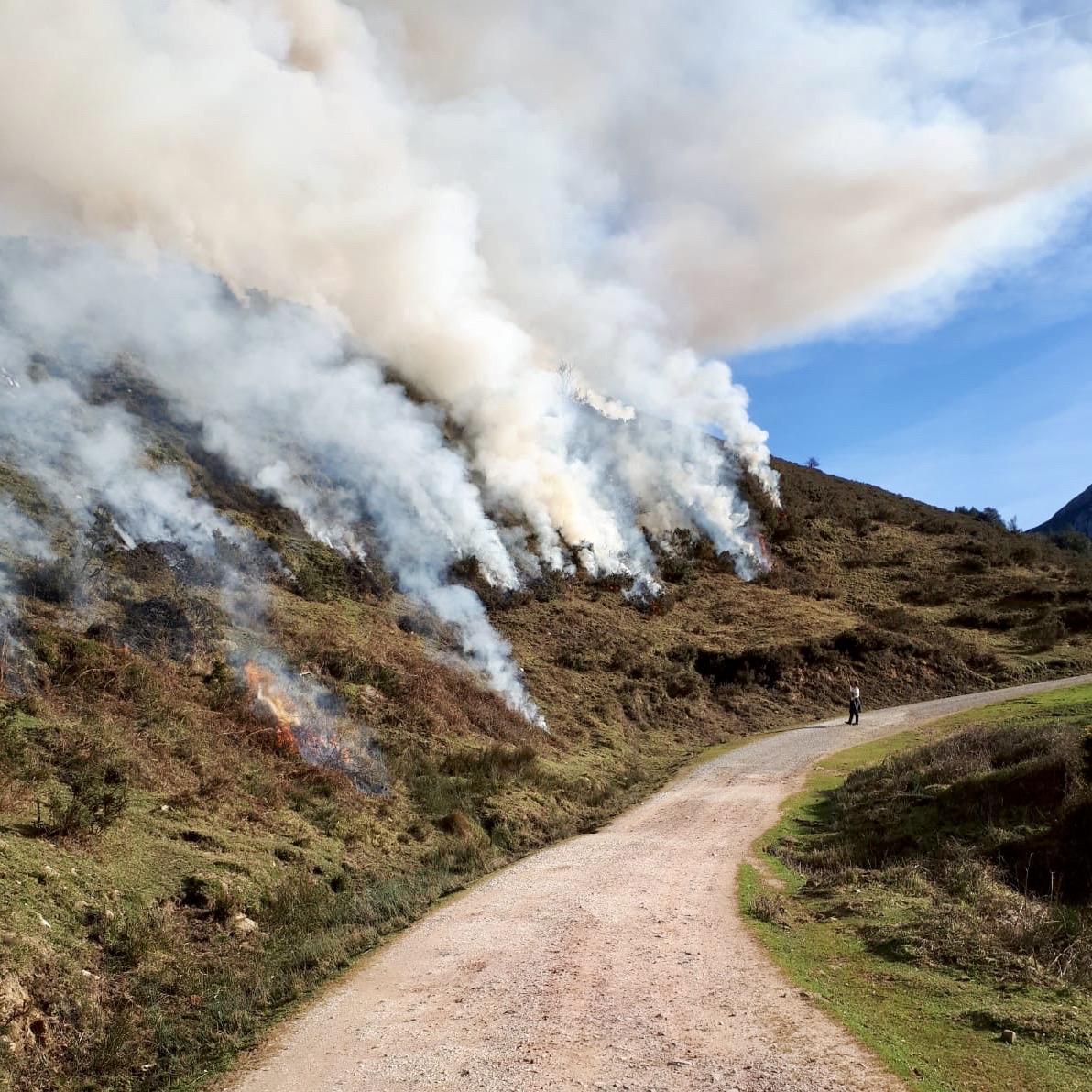 Desarrollo Rural y los ganaderos de Onís ponen en marcha una campaña de quemas controladas para recuperar pastizales