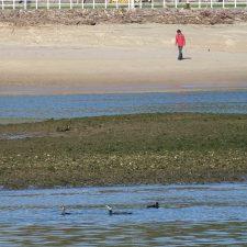 SEO/BirdLife pide restaurar la zona especial para las aves comprendida entre las rías de Ribadesella y Tina Mayor