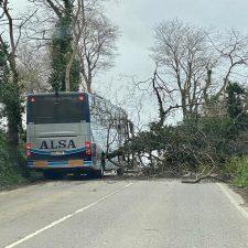 Numerosos árboles caídos en las últimas horas cortan varias carreteras en la comarca