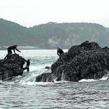 El Gobierno asturiano prohibe la extracción de percebe y el marisqueo a pie debido al coronavirus