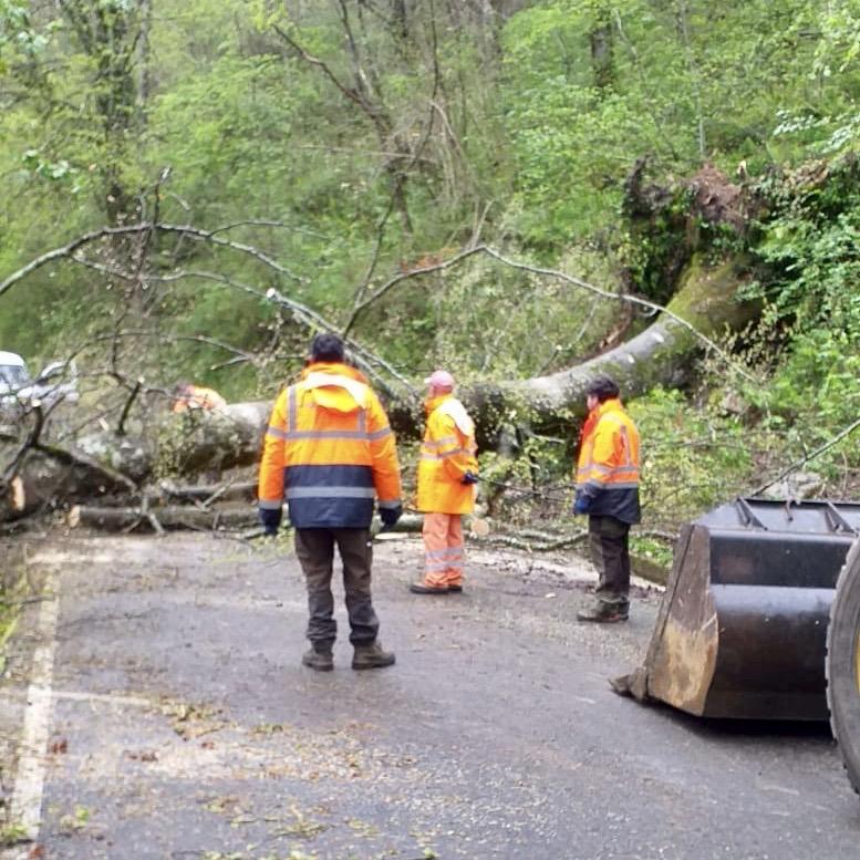 La caída de un enorme árbol mantuvo cortada la carretera de Los Lagos durante mas de dos horas