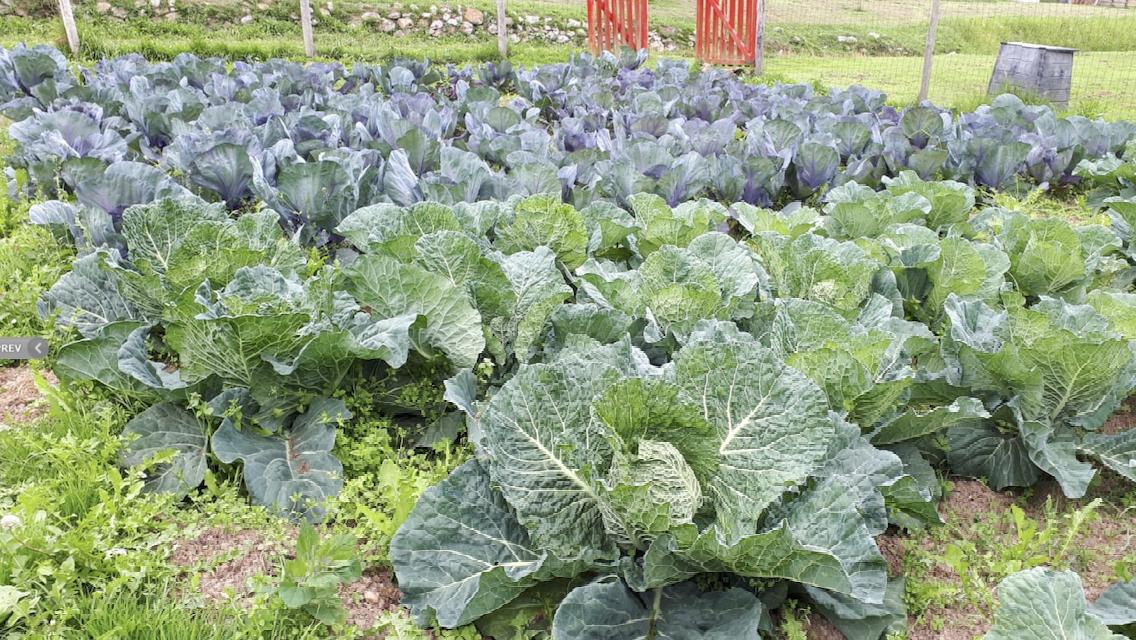 Un cocinero riosellano impulsa una plataforma online para vender productos agroalimentarios en tiempo de crisis