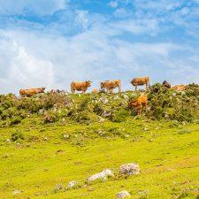 El Ayuntamiento de Piloña habilita una oficina especial para tramitar las licencias de pastos