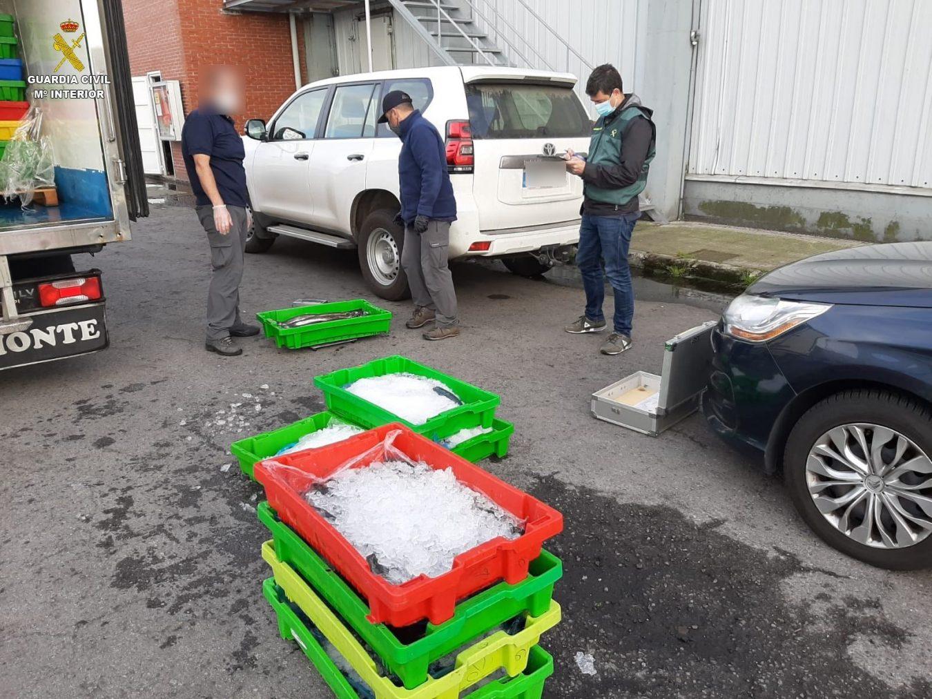 Interceptado un camión con 304 kilos de merluza sin documentación procedente de Lastres y con destino Vigo