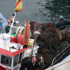 Los ecologistas piden la inmediata paralización de la campaña de arranque de ocle