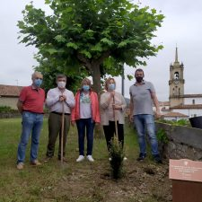 Colunga planta su Texu de la Memoria en los jardines del centro de salud
