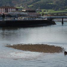 Las mareas vivas de octubre dejan al descubierto los problemas de calado en el puerto de Ribadesella