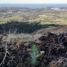 Vecinos de la Zona Rural de Ribadesella piden una franja de protección con especies autóctonas en la parte baja de la Cuesta de Moru