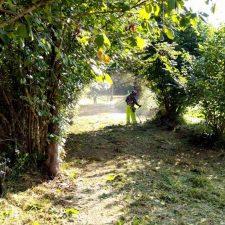 La limpieza y desbroce de caminos del concejo de Llanes llega a Ardisana y Purón