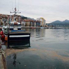 Las capturas de angula del mes de noviembre han caído un 30% en la rula de Ribadesella