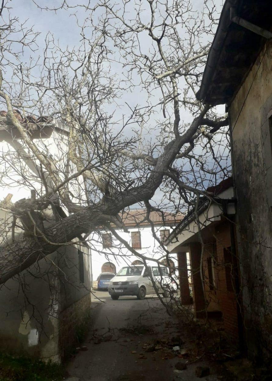 La caída de un árbol en Berodia (Cabrales) causa daños en una vivienda