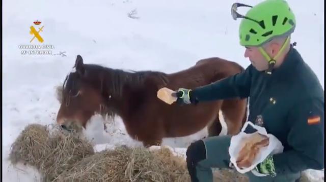 La Guardia Civil reparte medicinas y comida para el ganado en pueblos nevados de Ponga y Onís