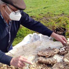 Llanes localiza tres nidos zanganeros de velutina en Piedra, Poo y Riufríu