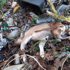 Denuncian la existencia de un vertedero con animales muertos junto al cauce de un río en el concejo de Piloña